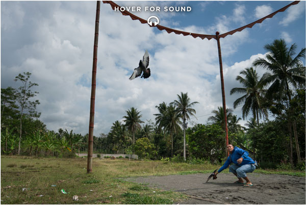 The Pigeon Racers Of Indonesia